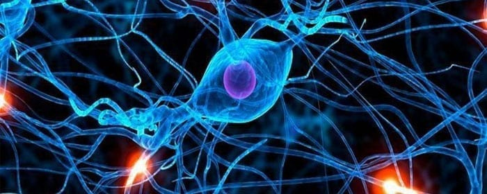 Stem Cells May Help with Aging-Related Neurodegenerative Disease