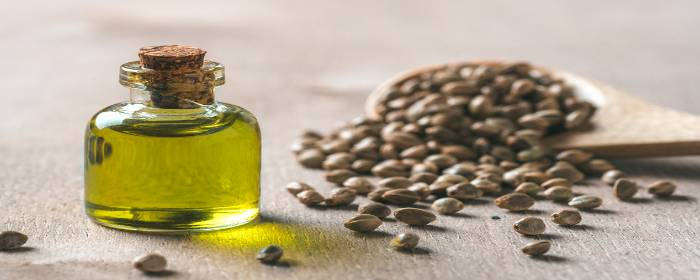 Can Hemp Extracts Aid in Chronic Pain Management?