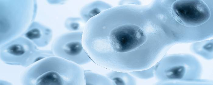 Stem Cells Restore Erectile Function after Prostate Removal Surgery
