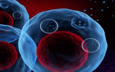 Exosomes Protect Joints from Osteoarthritis Damage